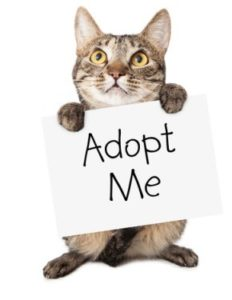 A cat holding a sign asking to be adopted.