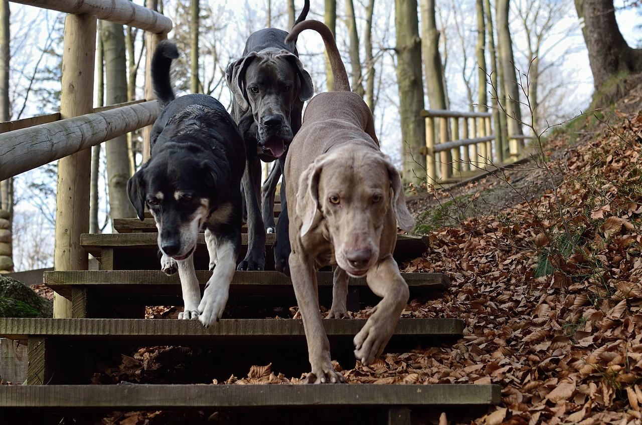 dogs in texarkana