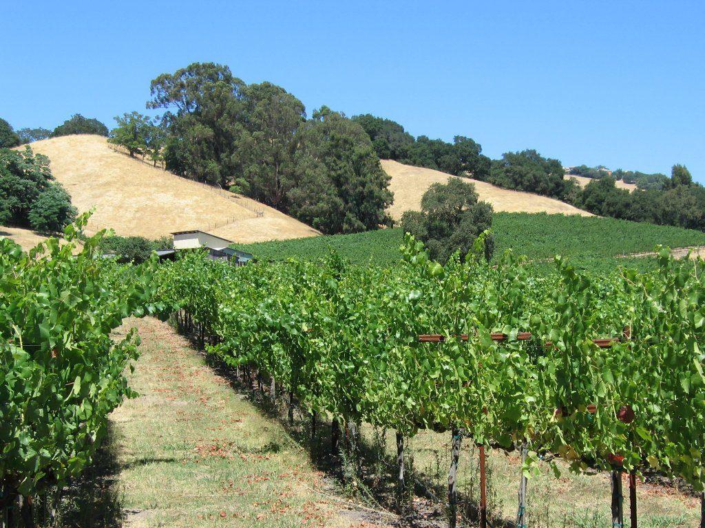 santa rosa vineyard